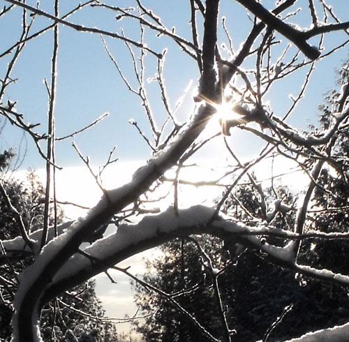 sun through apple tree