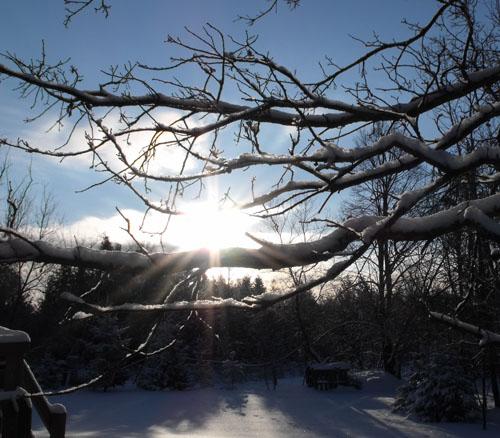 sun through oak tree