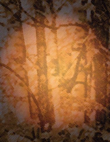 birch tree and moon
