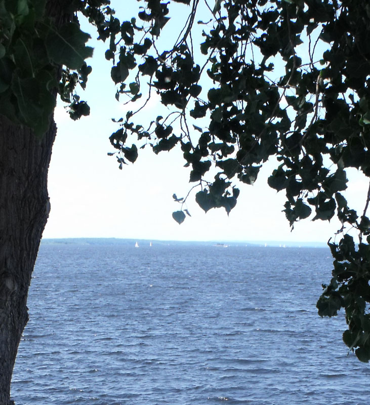 Hazy day on the Ottawa River, viewed from under a tree's leaves