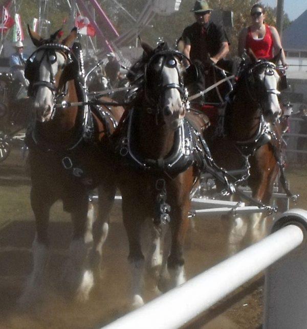 4 horse hitch