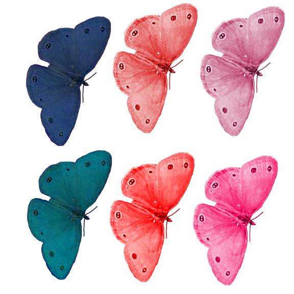 rainbow moths
