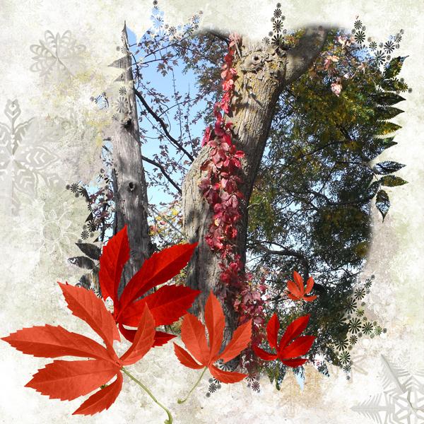 Ottawa Valley autumn