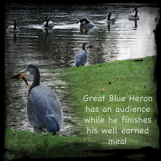 heron 3